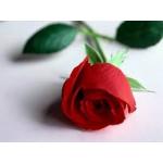 หัวน้ำหอมกลิ่น กุหลาบ Rose red 1kg
