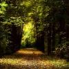 หัวน้ำหอม กลิ่นDeep Forest 002886