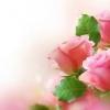 หัวน้ำหอม Oriental rose 000872