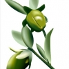 Jojoba Oil 100ml**