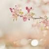 หัวน้ำหอมกลิ่น beauty blossom 002351