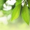 หัวน้ำหอม herbal green 000868