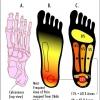 เส้นเอ็นฝ่าเท้าอักเสบ (รองช้ำ) จะสามารถใช้ เครื่องออกกำลังกาย อะไรดี
