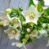 หัวน้ำหอมกลิ่น chomanard honey 002345