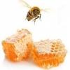 สารสกัดนมผึ้ง 20g (ลดสิว)