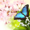 **หัวน้ำหอม Butterfly Hugs Fragrance 1-000397
