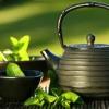 สารสกัด Camellia สารสกัดชาเขียวผสานกับชาขาว