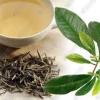 สารสกัดชาเขียว green tea 100ml