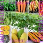 สุดยอดผัก ผลผลไม้บำรุงสายตา