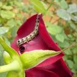 เครื่องไล่หนู และวิธีกำจัดแมลงในสวนดอกไม้ แปลงผัก โดยไม่ใช้สารเคมี