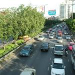 แปลบทความจีน 行道树