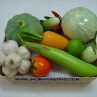 ชุดผักสวนครัว 10 แบบ