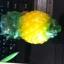 แม่พิมพ์ รูปสับปะรด 5 ช่อง 120g thumbnail 1