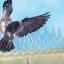 หนามกันนกเกาะ หนามไล่นกรบกวน Bird Spike (Stainless) thumbnail 2