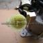 ไดชาร์จ ISUZU TFR ND (4JA1) 12V 70A (ใหม่) thumbnail 2
