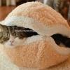ทีนอนแมว รูปแฮมเบอร์เกอร์แมว