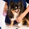 7 ขั้นตอนดูแลขนสุนัข ทำที่บ้านได้ง่าย ๆ
