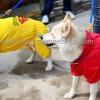 เสื้อกันฝนสุนัข