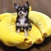 ที่นอนสุนัข ที่นอนหมา รูปกล้วยหอม