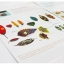 Joan Miro Children's Leaf Art ชุดทำศิลปะใบไม้ thumbnail 7