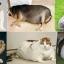 ชามสุนัขและแมว ป้องกันการสำลักชาม thumbnail 4