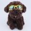 แว่นตาสุนัข สีเหลือง thumbnail 2