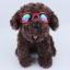 แว่นตาสุนัข สีแดง thumbnail 2