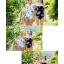 cnd-266-blue sky thumbnail 14