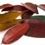 Joan Miro Children's Leaf Art ชุดทำศิลปะใบไม้ thumbnail 9