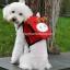 กระเป๋าเป้สุนัข กระเป๋าเป้แมว ลายหมูแดง สำเนา thumbnail 2