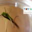 Eye Spy Magnifying Bug Insect Viewer ที่ส่องขยายแมลง กล่องดูแมลงจิ๋ว thumbnail 5