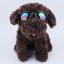 แว่นตาสุนัข สีดำ thumbnail 2