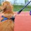 สายจูงสุนัขโต แบบรัดอก สีน้ำเงิน thumbnail 3