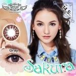 Sakura Gray Dreamcolor1เลนส์นิ่มใส่สบาย คอนแทคเลนส์ ขายส่งคอนแทคเลนส์ ขายส่งBigeye บิ๊กอายเกาหลี