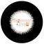 สั้น/power -125 ROCK BLACK DREAMCOLOR 1 thumbnail 1