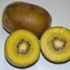 กีวี่สีทอง - Golden Kiwi