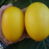 เมล่อนมะม่วง - Vine Peach Melon
