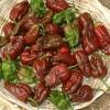 พริกฮาบาเนโร่สีน้ำตาล - Chocolate Habanero Pepper