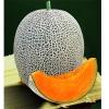 เมล่อนสเปน - Spanish Melon (พรีออเดอร์)