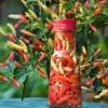 พริกทาบาสโก้ - Tabasco Pepper