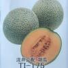 เมล่อนทีไอ-175 - TI-175 Melon (พรีออเดอร์)