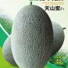 เมล่อนฮันนี่เทียนชาน - Tianshan Honey Melon (พรีออเดอร์)
