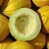 เมล่อนคาซาบา - Casaba Melon