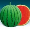 แตงโมไร้เมล็ดเวฟ 1 - Wave I Seedless Watermelon 50 กรัม (พรีออเดอร์)