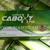 CABOXY X FOX คาร์บ็อกซี่ ฟ๊อก อาหารเสริมลดน้ำหนัก โปร ลด 60-80%