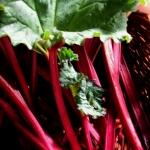 รูบาร์บ - Rhubarb
