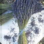 ช่อดอกลาเวนเดอร์ฝรั่งเศสแห้ง - Dried French Lavender