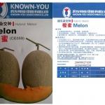 เมล่อนออเร้นจ์ฮันนี่ - Orange Honey Melon (พรีออเดอร์)