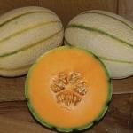 เมล่อนทัสคานี่ - Tuscany Melon