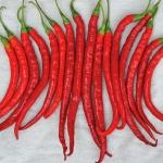 พริกคาเยนผลยาวสีแดง - Long Red Cayenne Pepper